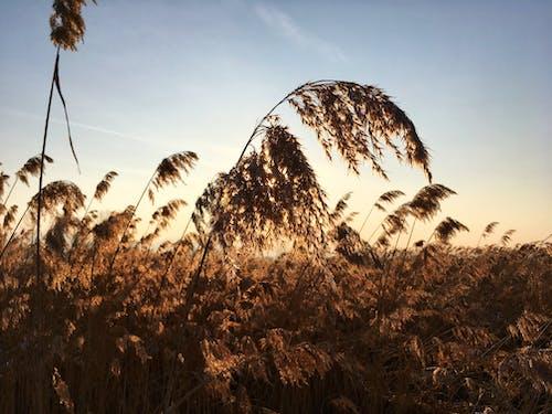 Imagine de stoc gratuită din aur, după-amiază, frumos apus, galben