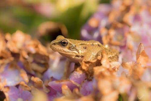 Brown Frog on Purple Flower