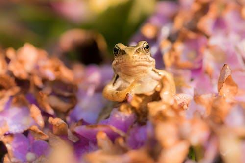 Ảnh lưu trữ miễn phí về cận cảnh, con vật, ếch, hệ thực vật