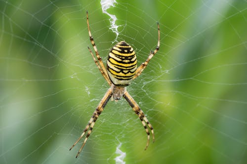 Brown, White, Black and Yellow Spider