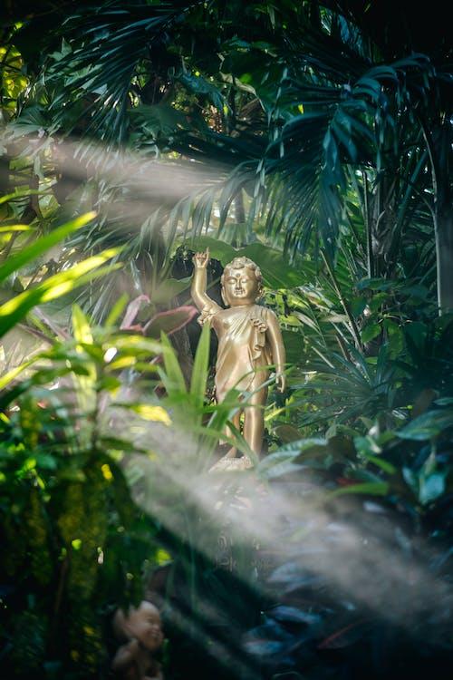 Foto d'estoc gratuïta de estàtua, llum del sol, plantes
