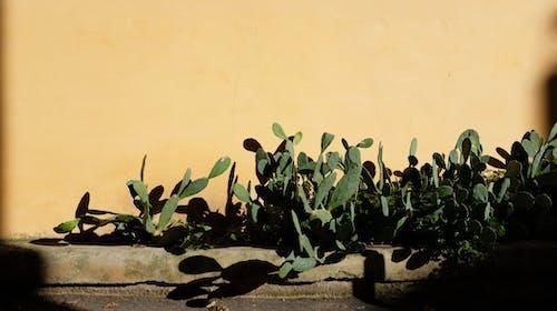 Photos gratuites de cactus, lumière du soleil, ombre