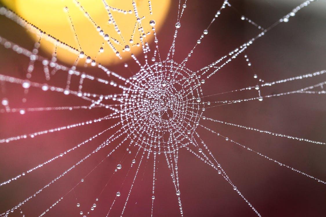 Wet Spiderweb