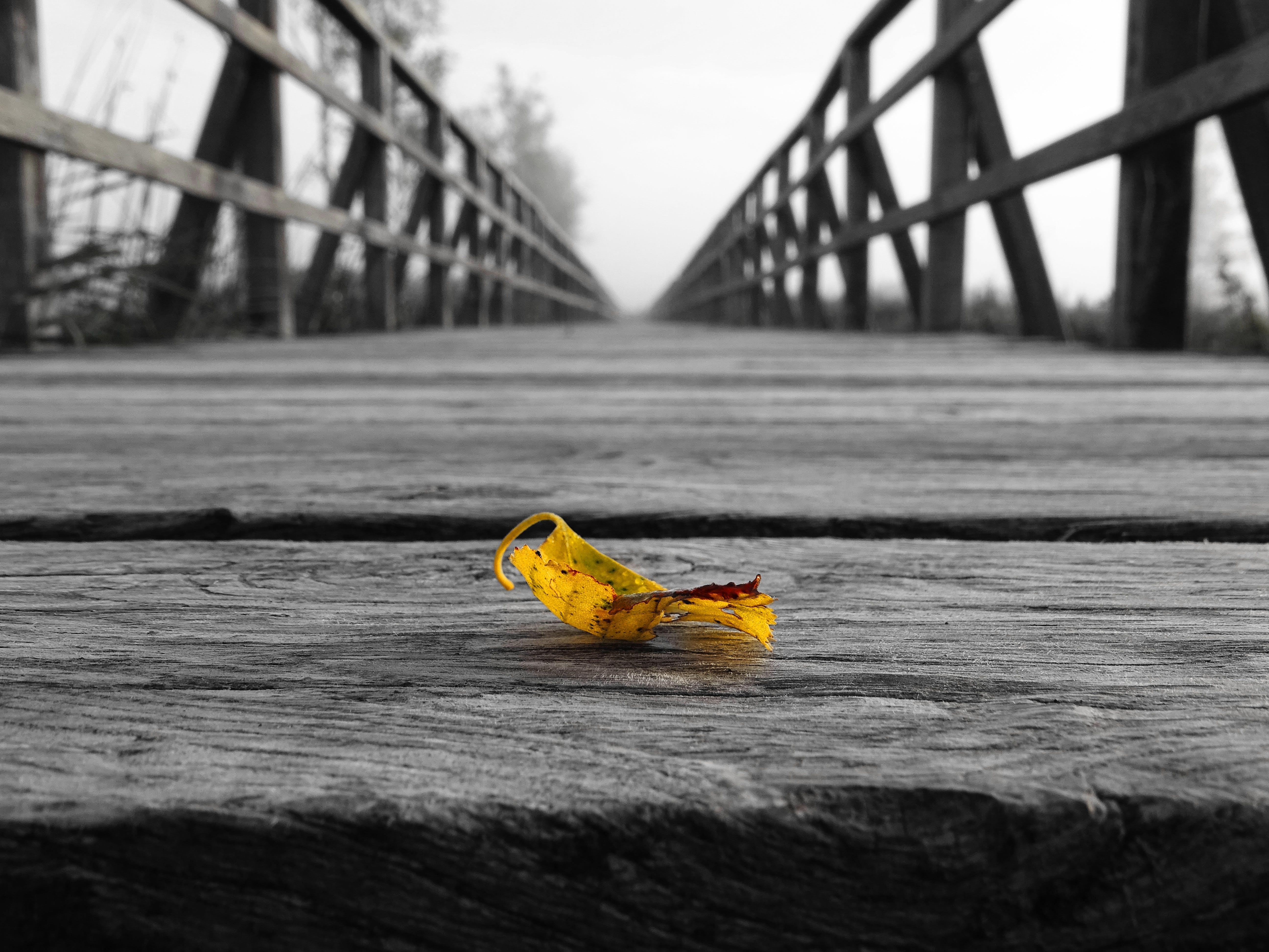 black-and-white, bridge, leaf