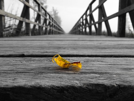 Free stock photo of wood, black-and-white, bridge, leaf