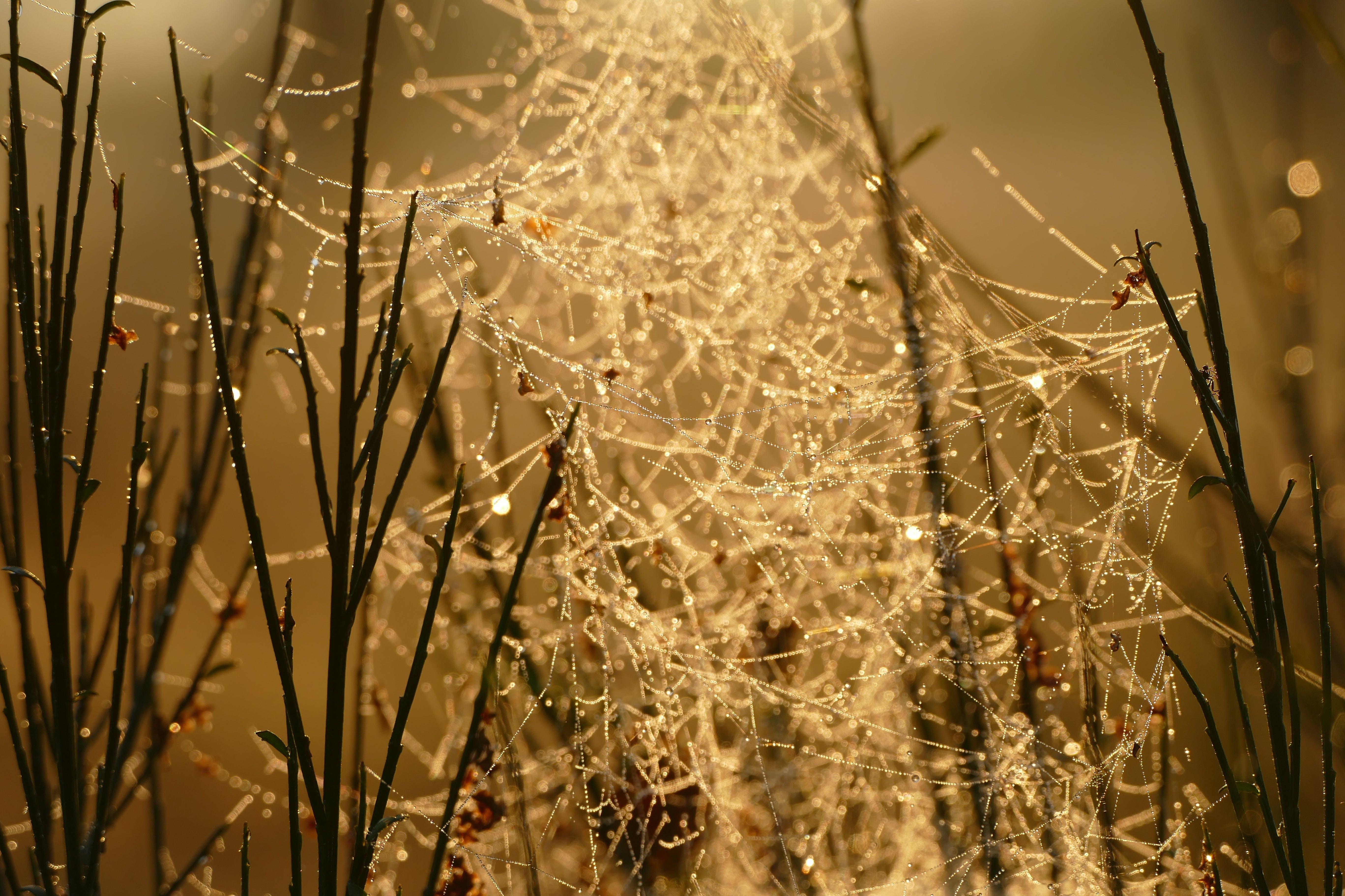 Spider Web on Black Stick