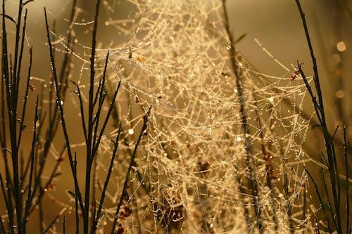 Photos gratuites de araignée, aube, brillant, brouillard