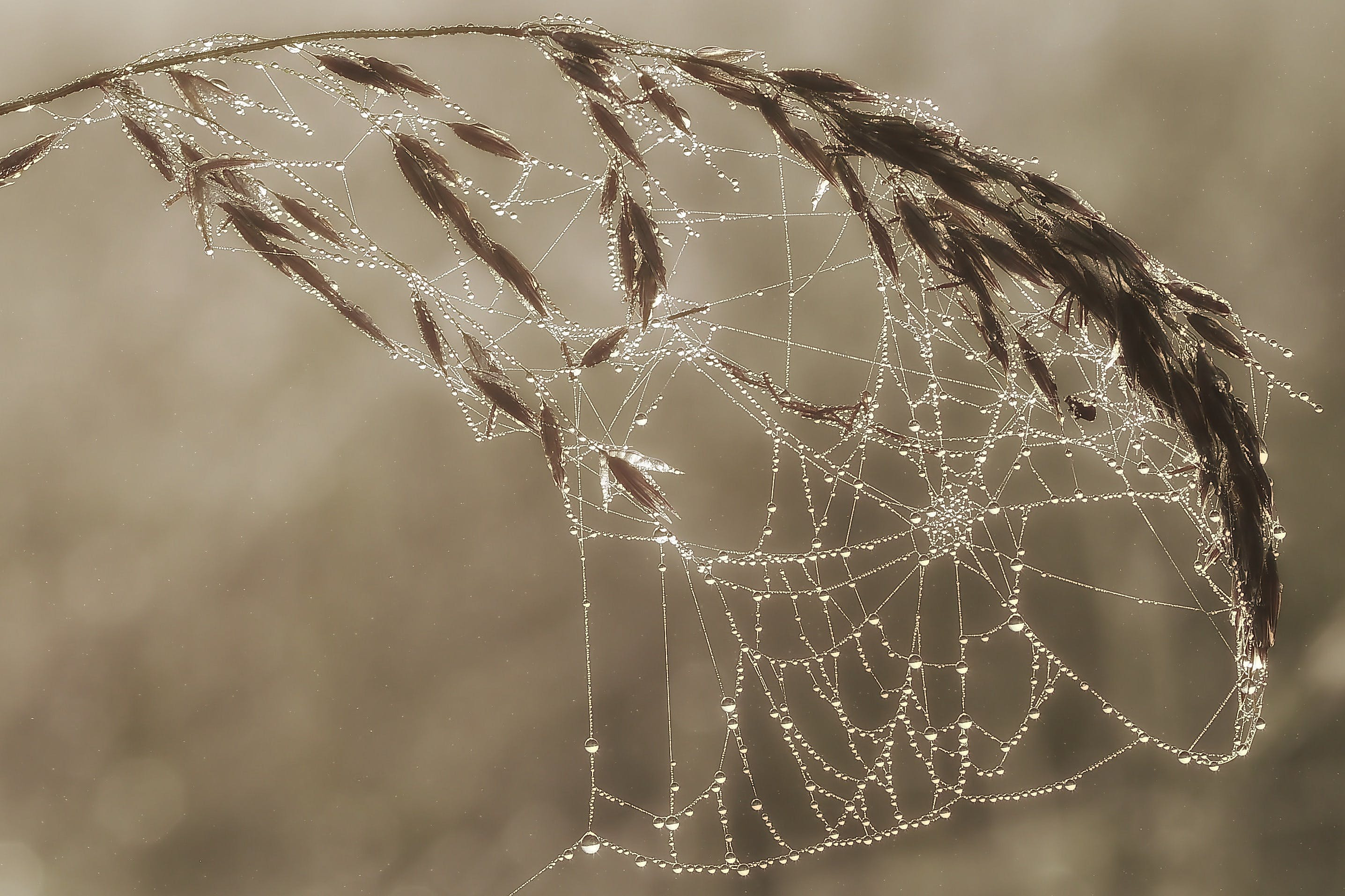 Free stock photo of plant, cobwebs, macro, cobweb