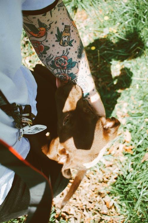 Immagine gratuita di all'aperto, animale, animali, artista del tatuaggio