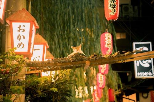 Darmowe zdjęcie z galerii z hozenji, kot, latarnia, osaka