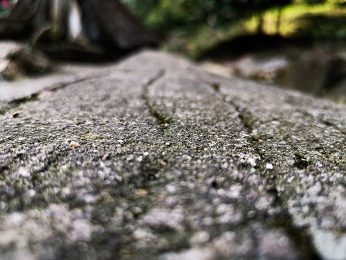 Free stock photo of focus, macro, nature, rock