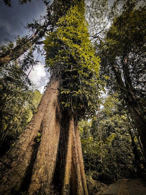 Free stock photo of leaf, nature, tree, wood