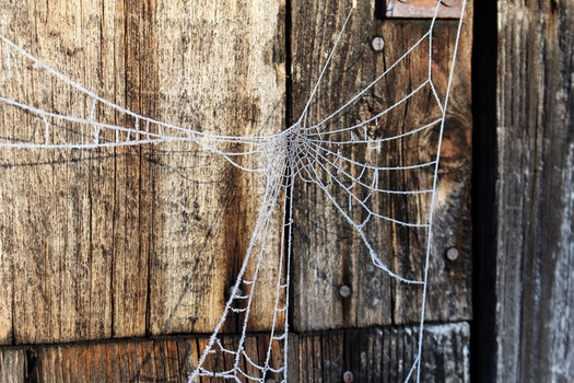 Free stock photo of cold, frost, spider web