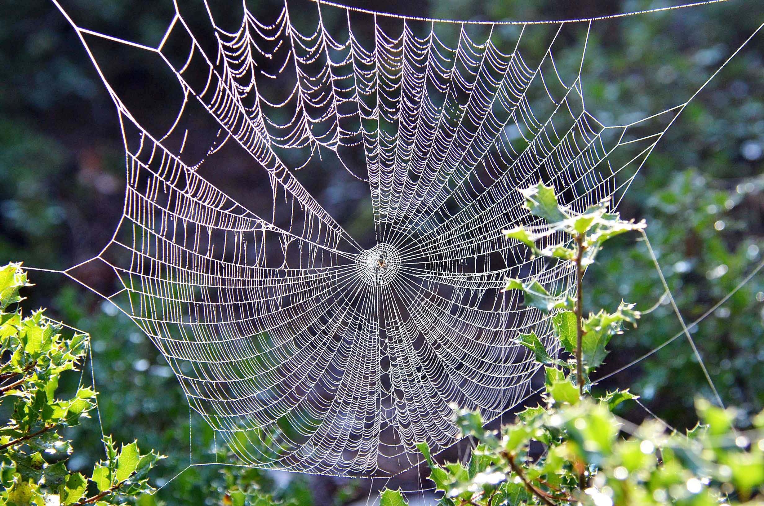 Spider Web Beside Leafed Plant
