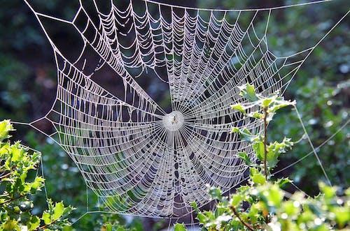 Web, 互联网, 原本, 圖案 的 免费素材照片