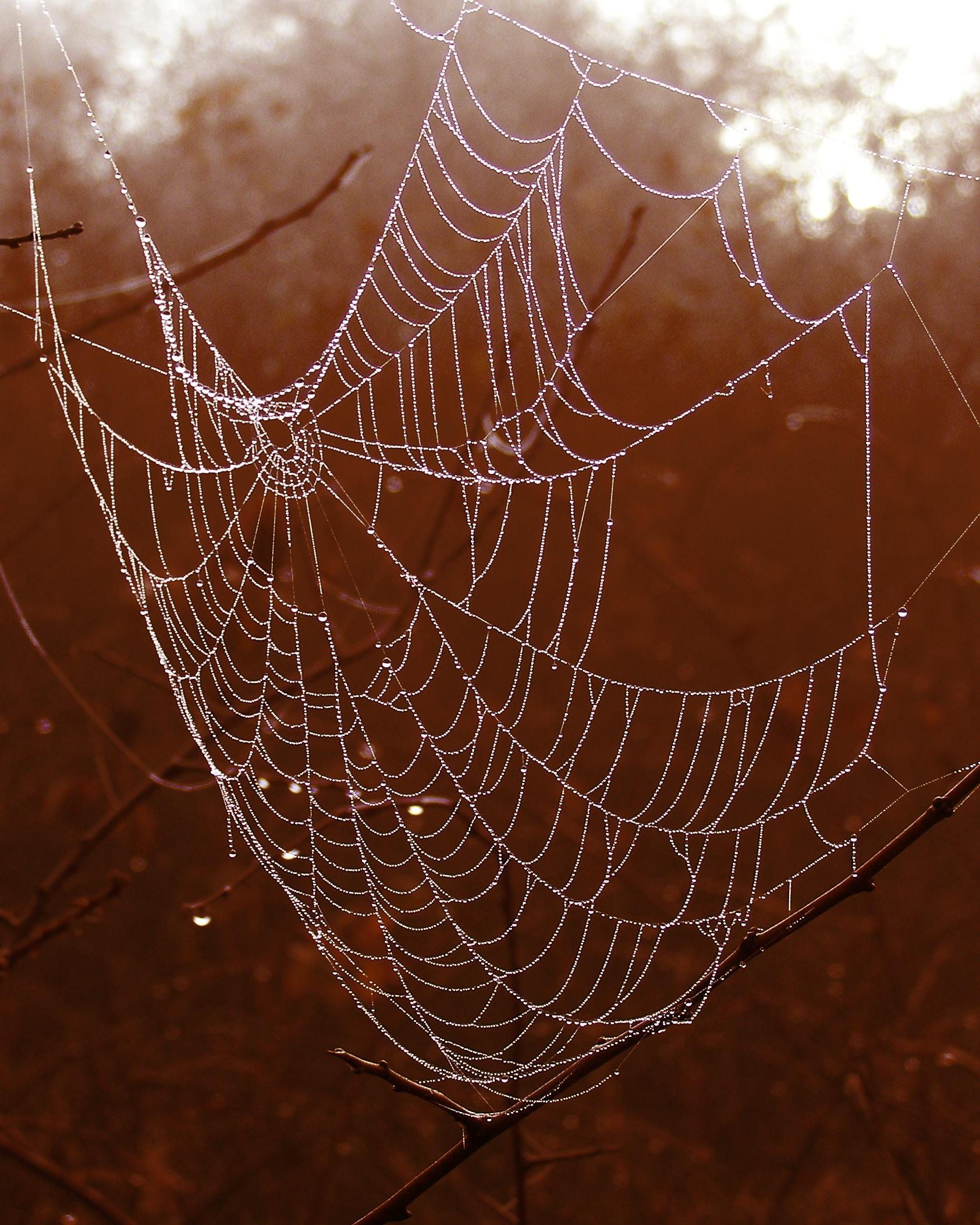 arachnid branches close up cobweb