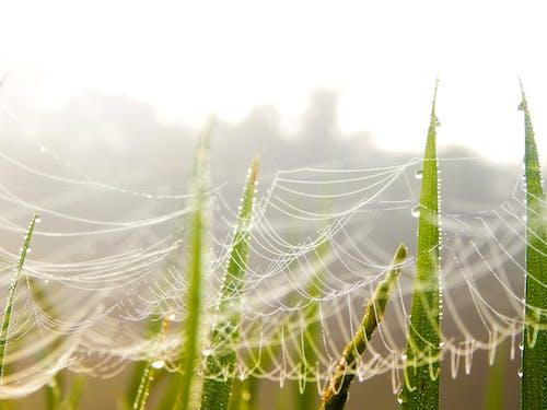 Immagine gratuita di alba, aracnide, concentrarsi, erba