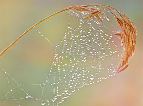 Free stock photo of dew, macro, cobweb, web