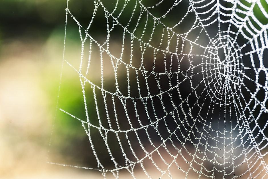 arachnid, artistic, blur