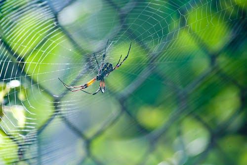 ウェブ, クモ, クモの巣, ぼかしの無料の写真素材