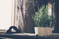 smoke, incense