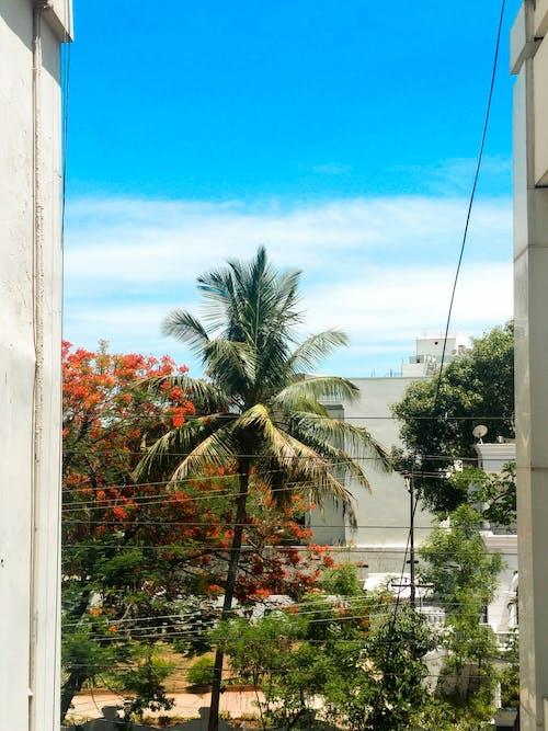 Immagine gratuita di albero, albero di cocco, azzurro, bellissimo