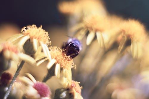 Ilmainen kuvapankkikuva tunnisteilla hyönteinen, kukat, lähikuva, luonto