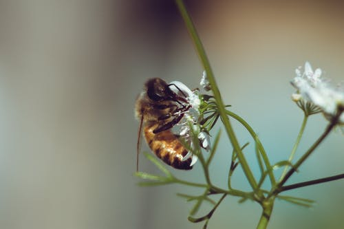 Free stock photo of bee, close up, flowers, insect