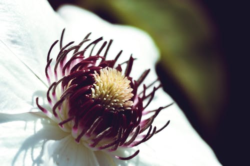 Free stock photo of blossom, flora, garden, nature