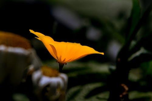 Free stock photo of blooming, garden, macro, orange