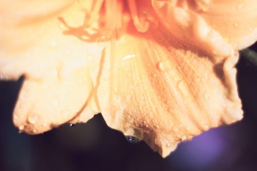Ilmainen kuvapankkikuva tunnisteilla appelsiini, keltainen, kukintaa. kukinta, lilja kukka