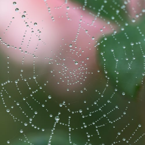 Macro Photography of Spider Web With Water Drops