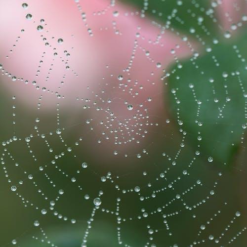 Fotobanka sbezplatnými fotkami na tému detailný záber, internet, kvapky, kvapky dažďa