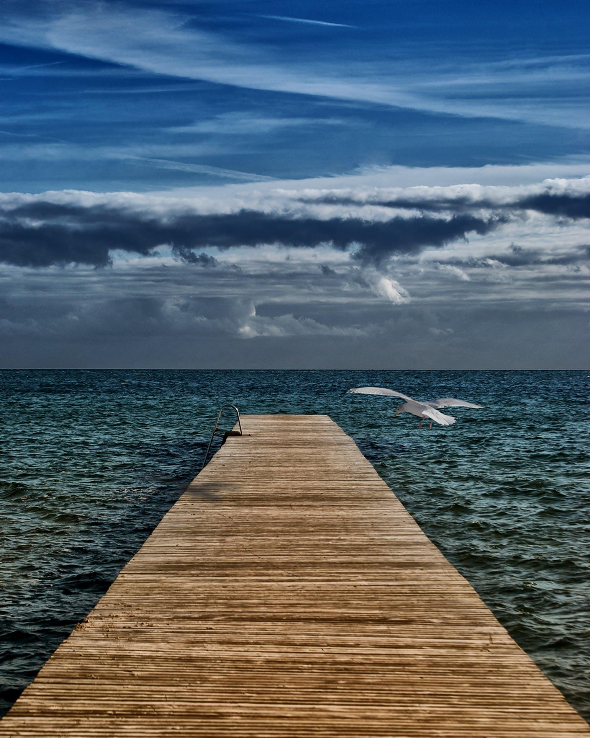 bird, blue sky, boardwalk