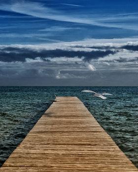 Free stock photo of jetty, sea, dawn, nature