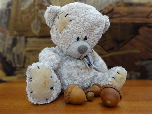 吉祥物, 泰迪熊 的 免費圖庫相片