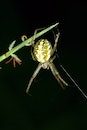 night, insects, spider