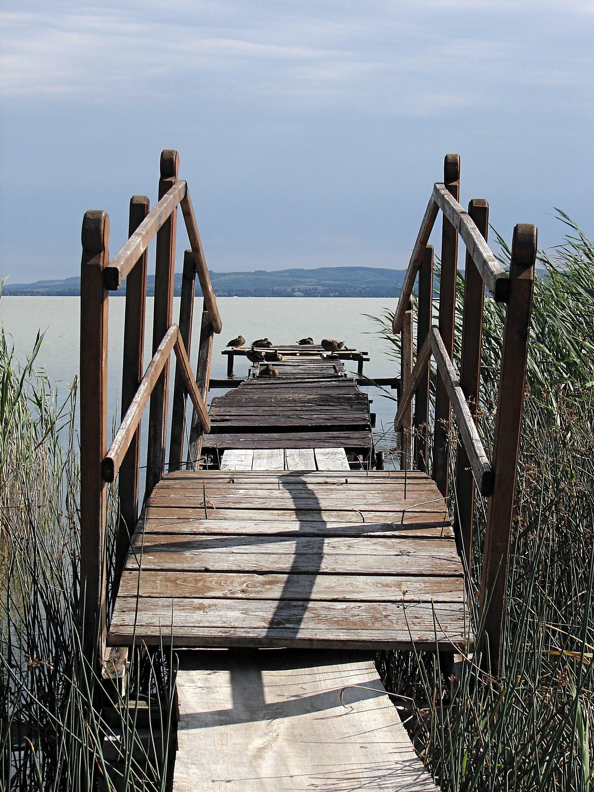 Free stock photo of balaton, hungary, lake balaton, web