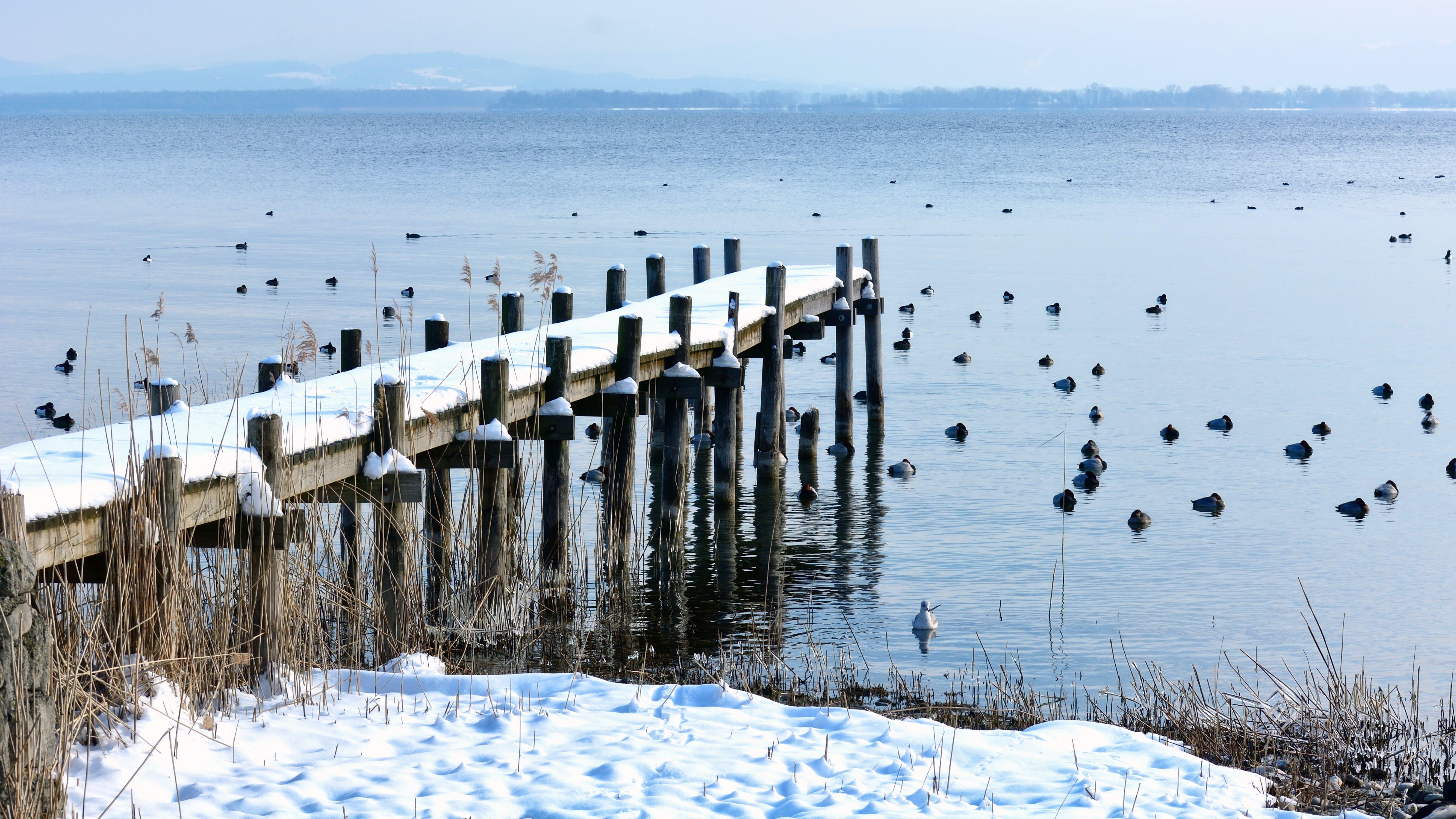 Birds on Body of Water