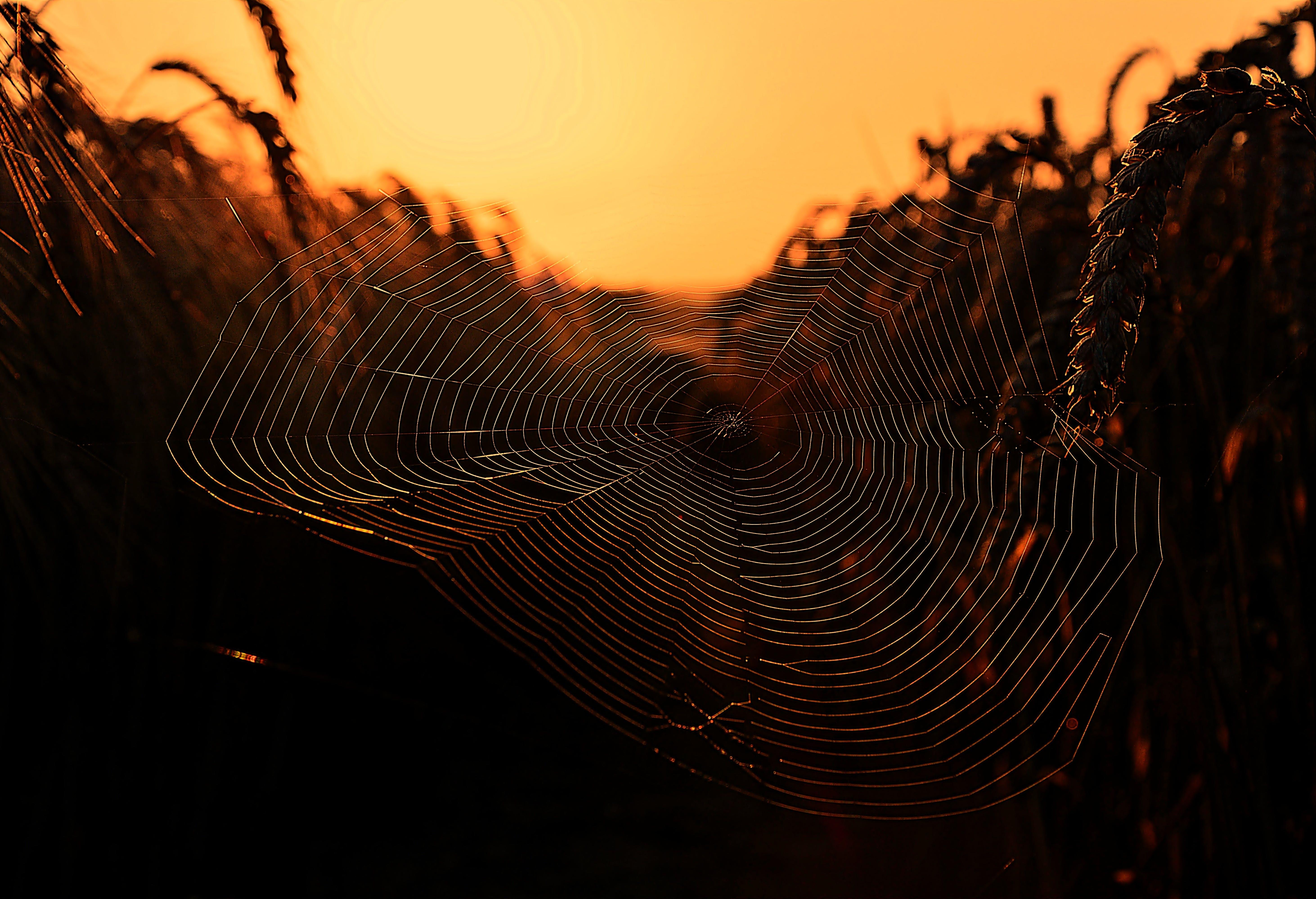 dark, dawn, pattern