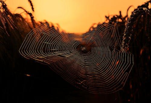 Kostnadsfri bild av gryning, internet, mönster, mörk
