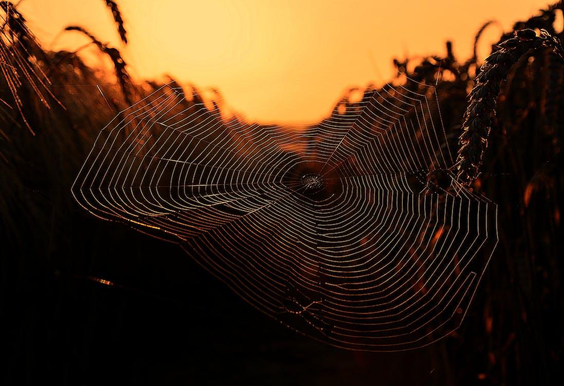 Web, 圖案, 形式