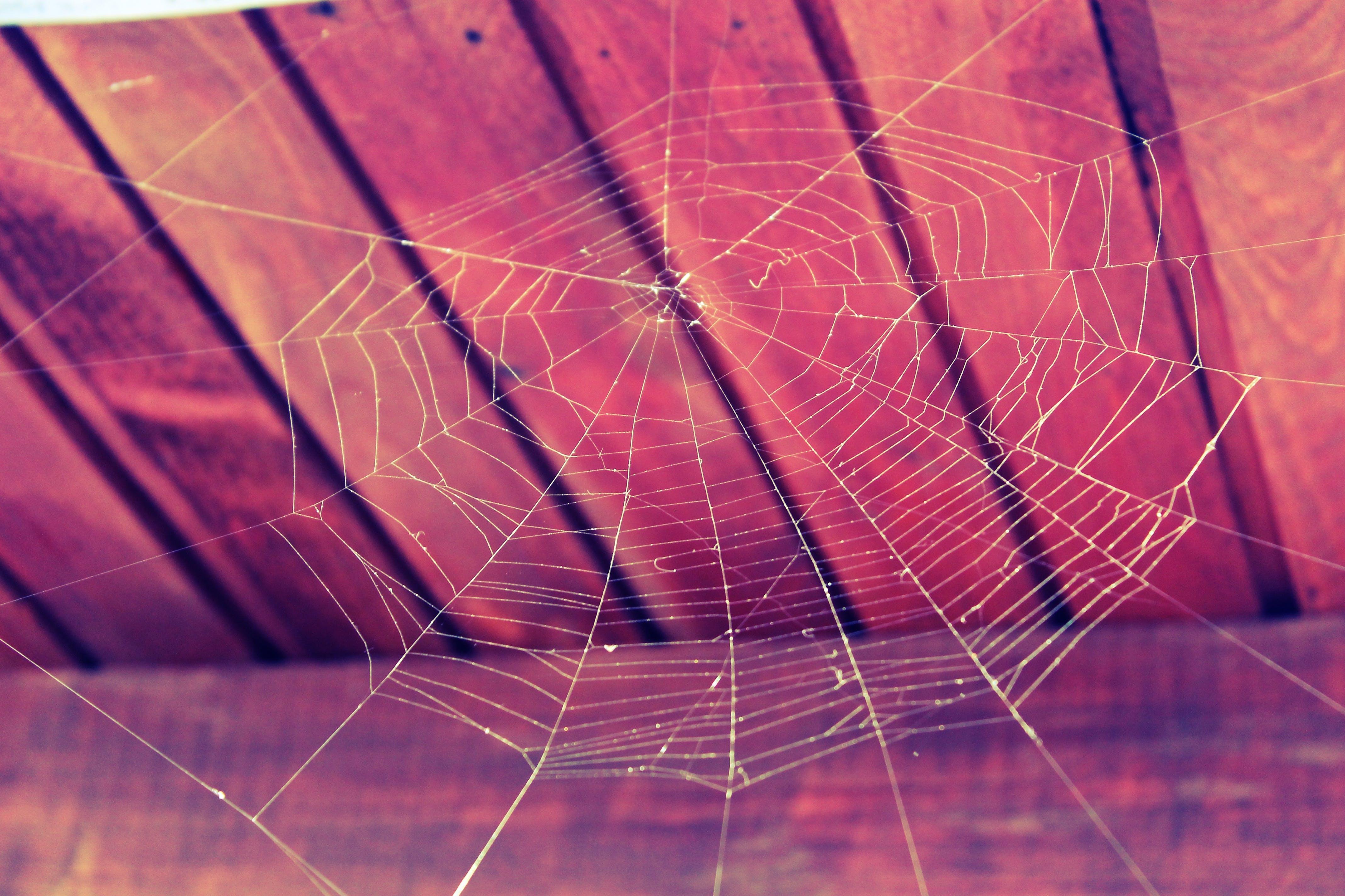 close-up, cobweb, connection