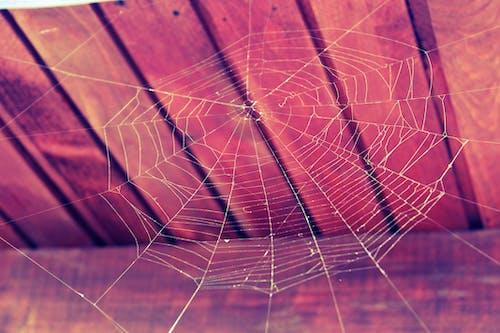 Ilmainen kuvapankkikuva tunnisteilla Halloween, hämähäkinseitti, hämähäkinverkko, kevyt