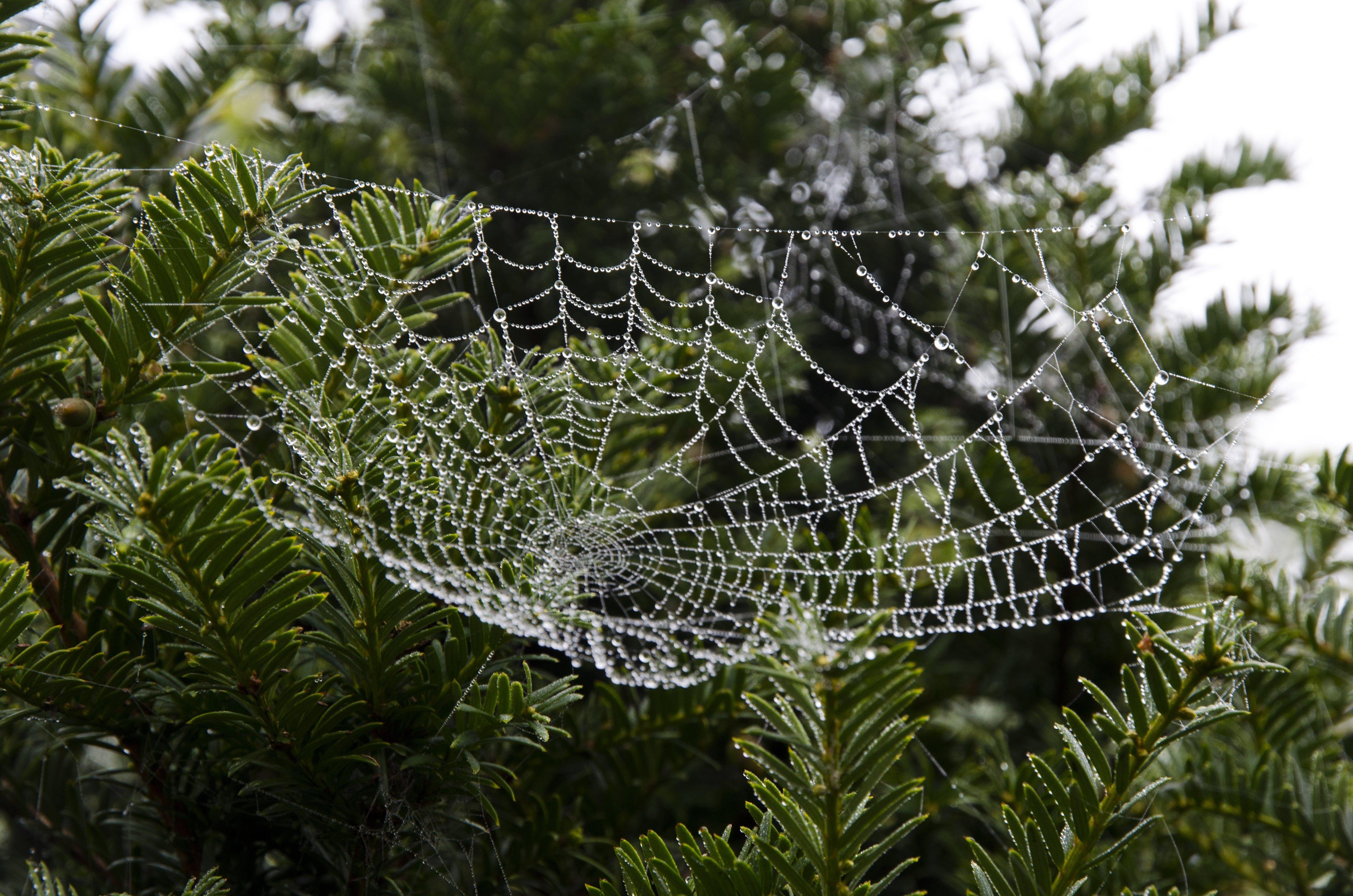 Spiderweb on Green Leafed Tree