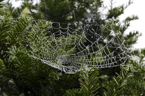 Spiderweb on Green Leafed Tree