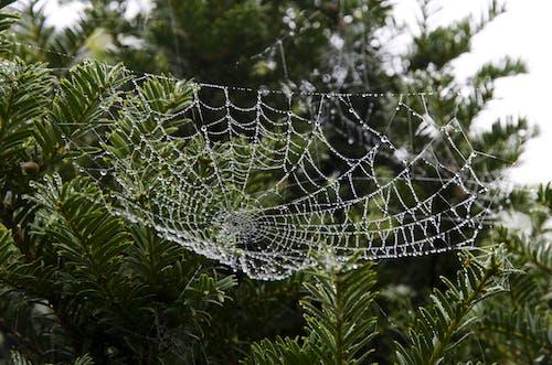 Ilmainen kuvapankkikuva tunnisteilla aamu, ansa, hämähäkinseitti, kaste