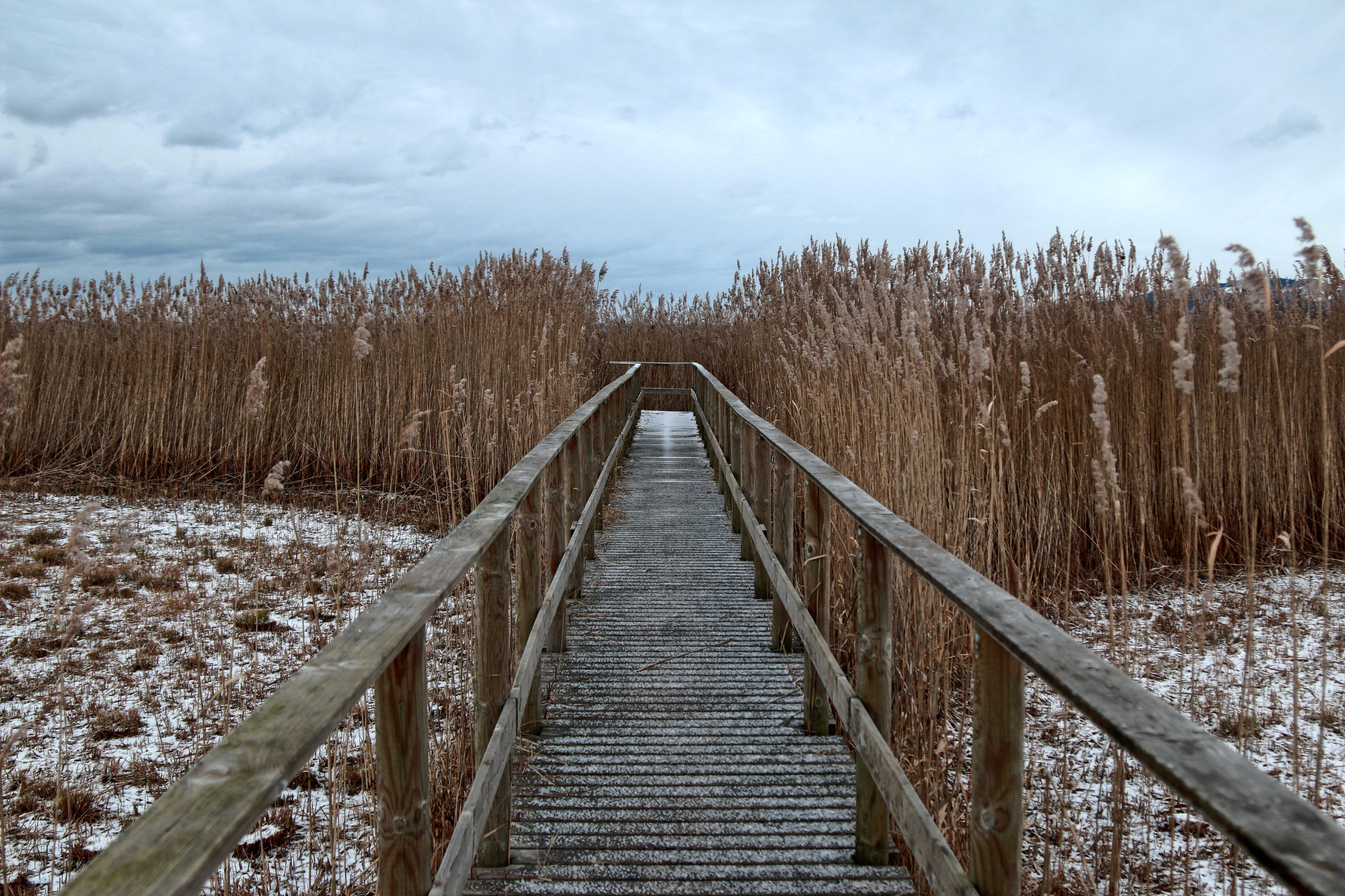 Brown Wooden Bridge Between Grass