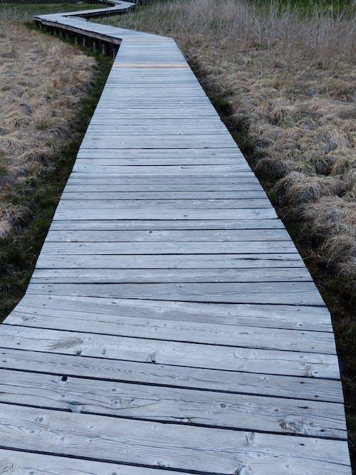 목조, 보드워크, 오솔길, 잔디의 무료 스톡 사진