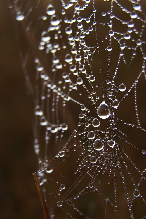Macro Photography of Spiderweb
